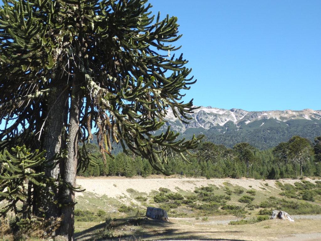 vegetazione-patagonia-deserto-www.traduzionespagnolo.com